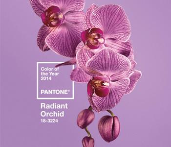 彩通(Pantone)專色奠定世界色彩基調